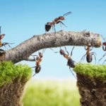 Frases trabajo en equipo para motivar