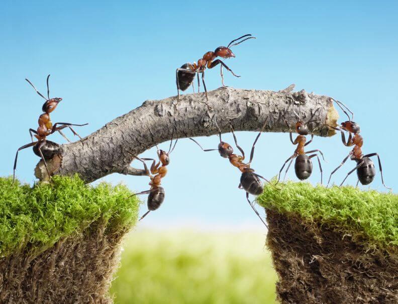 25 frases para trabajar en equipo