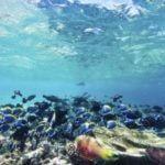 La estrategia del océano azul para liderar con innovación empresarial